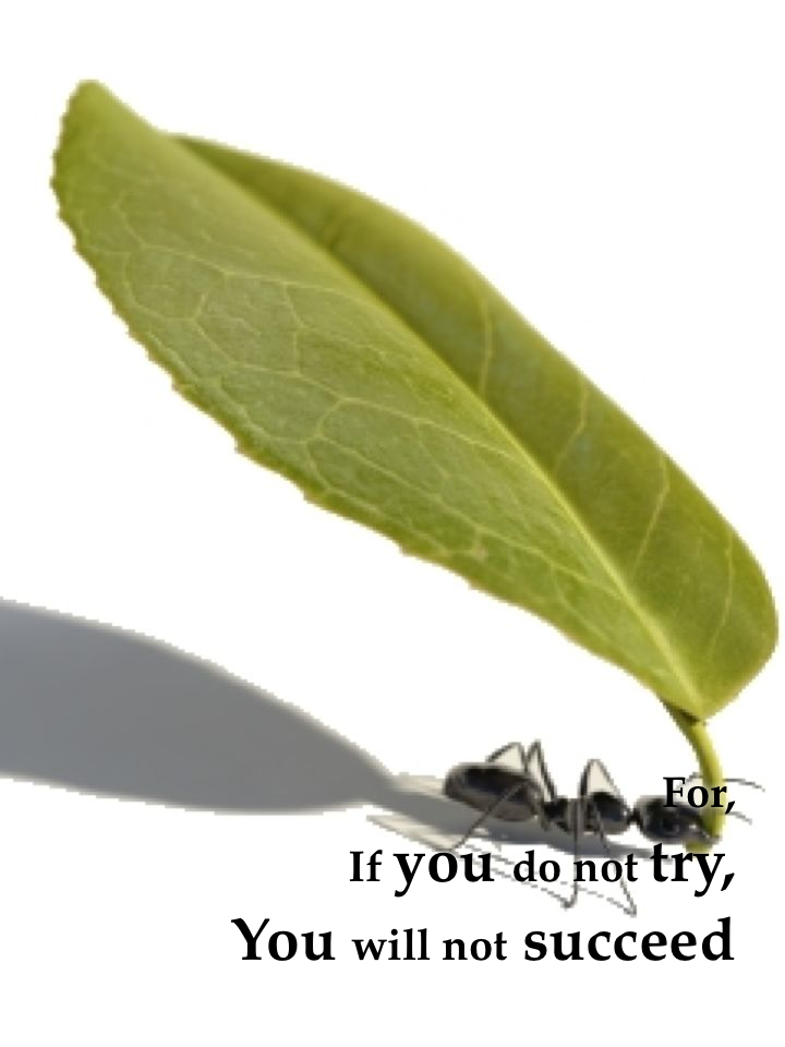 For, If you do not try, You will not succeed