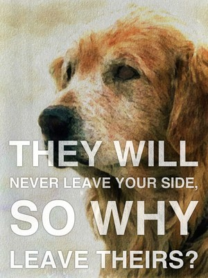 They will never leave your side, so why leave theirs?