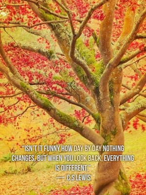 """Isn't it funny how day by day nothing changes, but when you look back, everything is different."" — C.S Lewis"