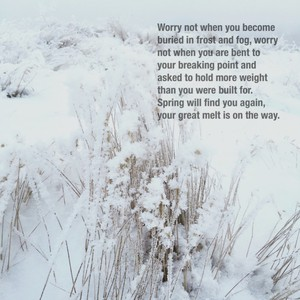 Worry not when you become buried in frost and fog, worry not when you are bent to your breaking point and asked to hold more weight than you were built for. Spring will find you again, your great melt is on the way.