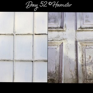 Day 52 ©Hamster