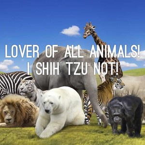 Lover of ALL animals! I Shih Tzu not!