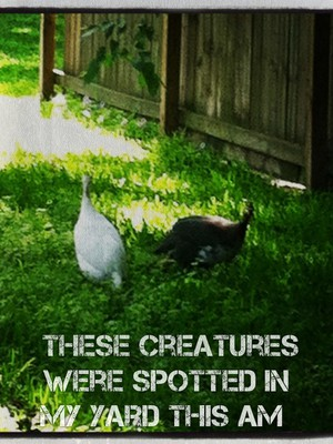 These creatures were spotted in my yard this am
