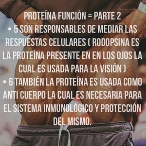 Proteína función = parte 2 • 5 son responsables de mediar las respuestas celulares ( rodopsina es la proteína presente en en los ojos la cual es usada para la visión ) • 6 también la proteína es usada como anti cuerpo la cual es necesaria para el sistema inmunológico y protección del mismo.