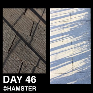 Day 46 ©Hamster