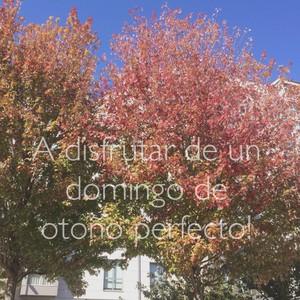 A disfrutar de un domingo de otoño perfecto!
