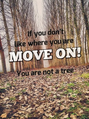 If you don't like where you are move on! You are not a tree