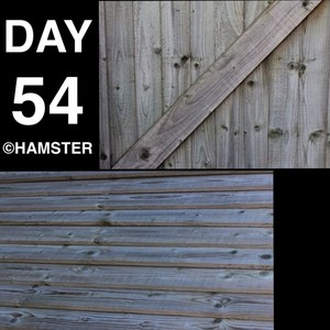 Day 54 ©Hamster