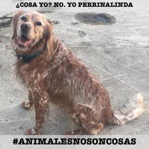 ¿Cosa yo? No. yo Perrinalinda #AnimalesNoSonCosas