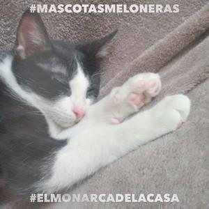 #MASCOTASMELONERAS #ELMONARCADELACASA