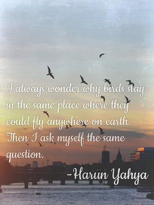 I always wonder why birds stay in the same place where they could fly anywhere on earth. Then I ask myself the same question. -Harun Yahya