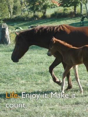 Life. Enjoy it. Make it count.