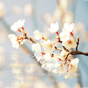 HƯƠNG XUÂN Xuân đến, xuân đi, xuân lại về Mai vàng nở rộ khắp làng quê Nghe mùi bụi phấn, lòng phơi phới Hương vị xuân về đã trót mê