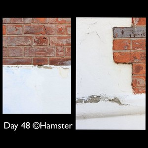 Day 48 ©Hamster