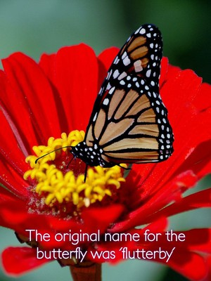 The original name for the butterfly was 'flutterby'