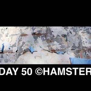 Day 50 ©Hamster hi