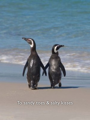 To sandy toes & salty kisses