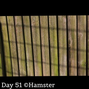 Day 51 ©Hamster