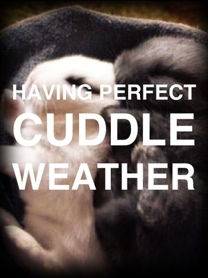 Having perfect cuddle weather