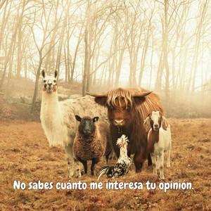 No sabes cuánto me interesa tu opinión.