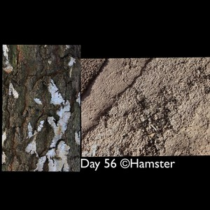 Day 56 ©Hamster