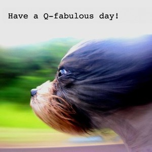 Have a Q-fabulous day!