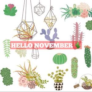 Hello November 🌵