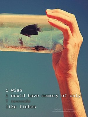 i wish i could have memory of only 7 seconds like fishes
