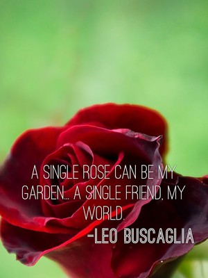 A single rose can be my garden... A single friend, my world. -Leo Buscaglia