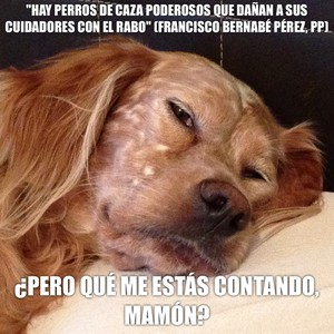 """""""Hay perros de caza poderosos que dañan a sus cuidadores con el rabo"""" (Francisco Bernabé Pérez, PP) ¿Pero qué me estás contando, mamón?"""